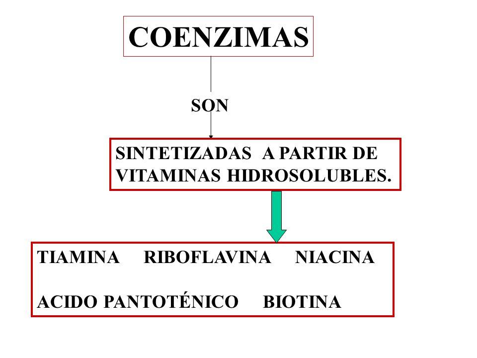 COENZIMAS SON SINTETIZADAS A PARTIR DE VITAMINAS HIDROSOLUBLES. TIAMINA RIBOFLAVINA NIACINA ACIDO PANTOTÉNICO BIOTINA