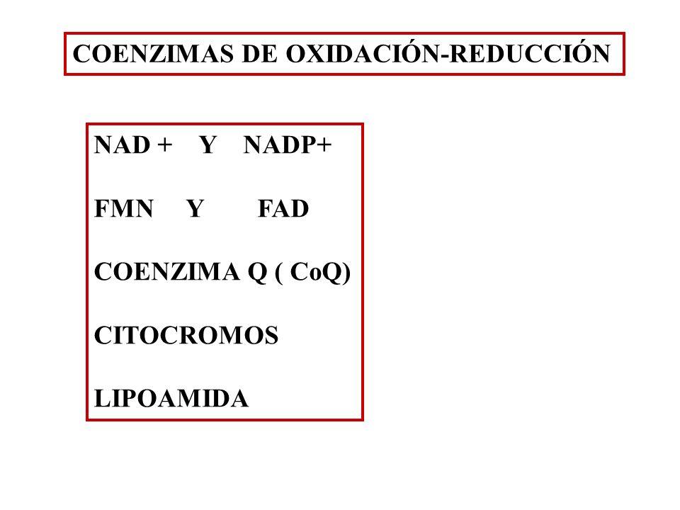 COENZIMAS DE OXIDACIÓN-REDUCCIÓN NAD + Y NADP+ FMN Y FAD COENZIMA Q ( CoQ) CITOCROMOS LIPOAMIDA