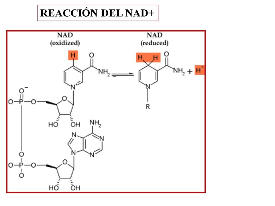 REACCIÓN DEL NAD+