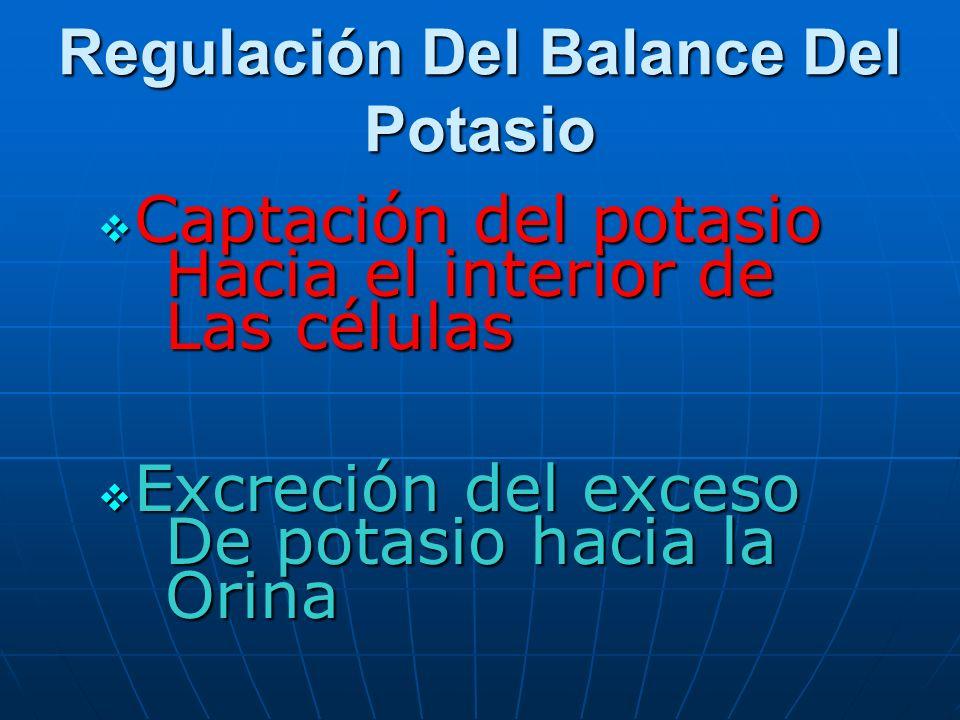 Regulación Del Balance Del Potasio Captación del potasio Captación del potasio Hacia el interior de Hacia el interior de Las células Las células Excre