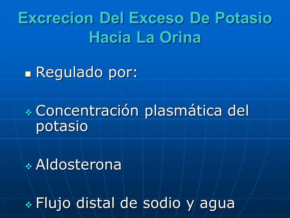 Excrecion Del Exceso De Potasio Hacia La Orina Regulado por: Regulado por: Concentración plasmática del potasio Concentración plasmática del potasio A