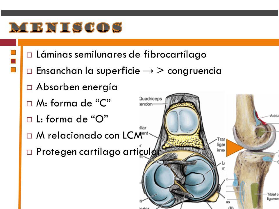 Láminas semilunares de fibrocartílago Ensanchan la superficie > congruencia Absorben energía M: forma de C L: forma de O M relacionado con LCM Protege