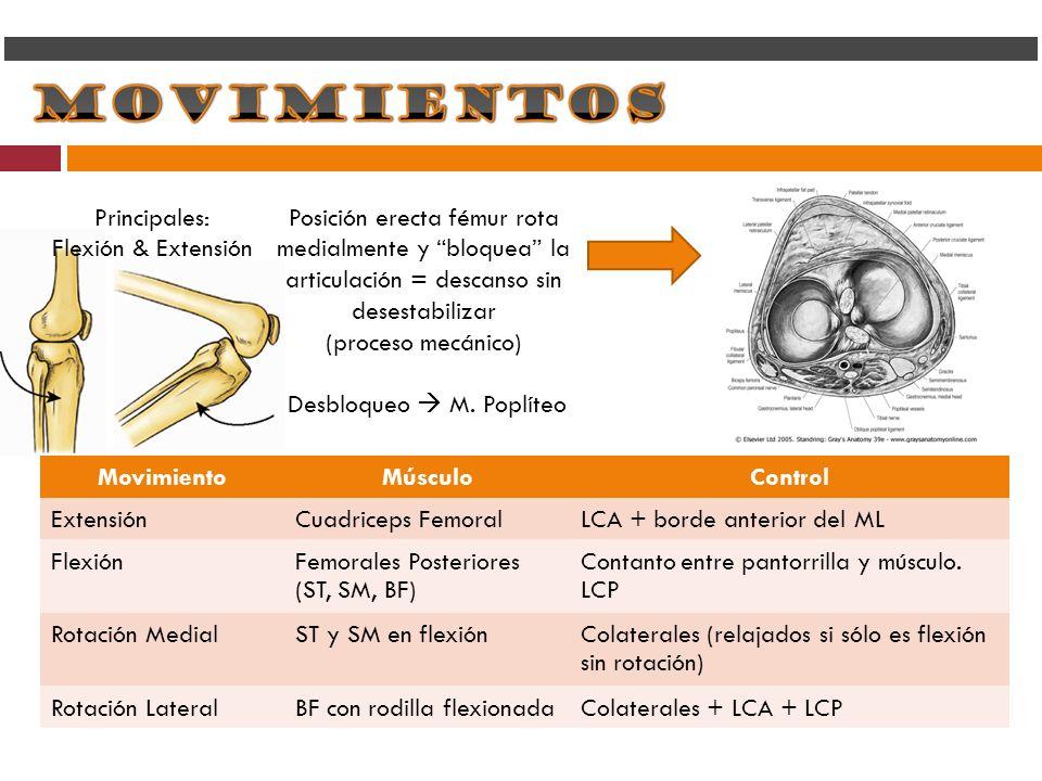 MovimientoMúsculoControl ExtensiónCuadriceps FemoralLCA + borde anterior del ML FlexiónFemorales Posteriores (ST, SM, BF) Contanto entre pantorrilla y