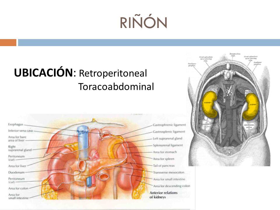 UBICACIÓN: Retroperitoneal Toracoabdominal