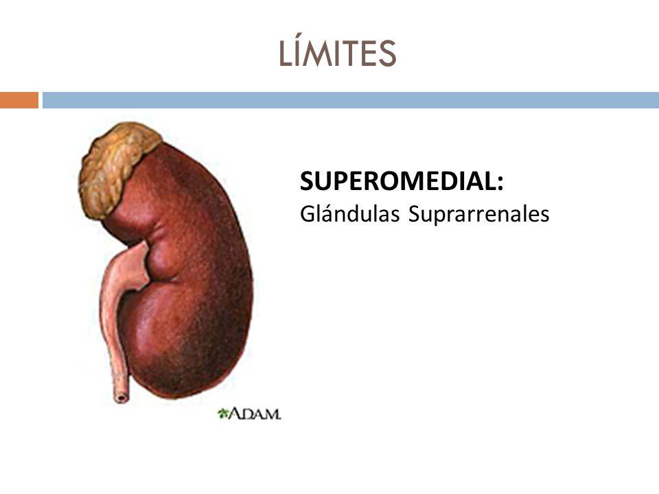 LÍMITES SUPEROMEDIAL: Glándulas Suprarrenales