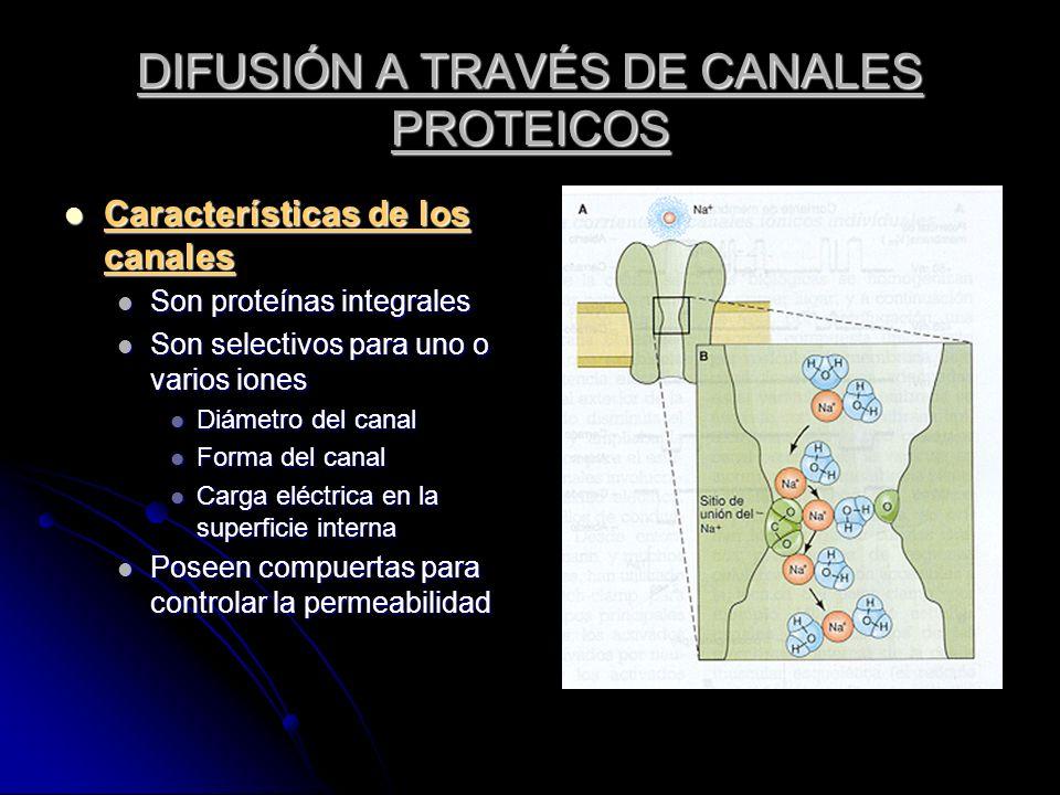 DIFUSIÓN A TRAVÉS DE CANALES PROTEICOS Características de los canales Características de los canales Son proteínas integrales Son proteínas integrales