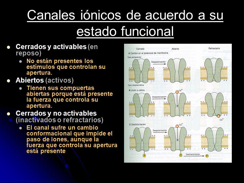 Canales iónicos de acuerdo a su estado funcional Cerrados y activables (en reposo) No están presentes los estímulos que controlan su apertura. Abierto