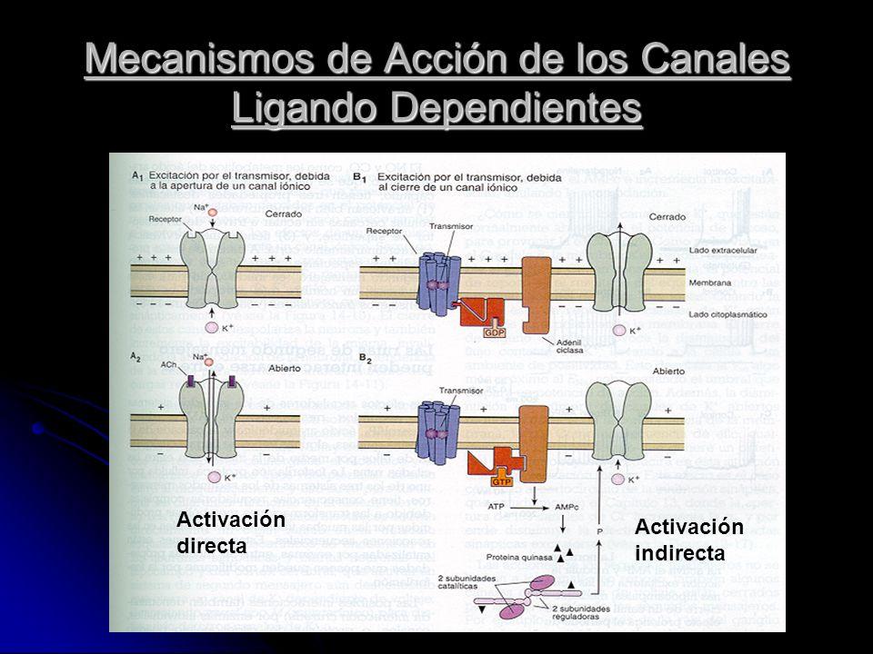 Mecanismos de Acción de los Canales Ligando Dependientes Activación directa Activación indirecta