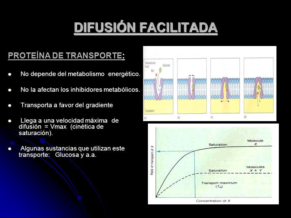 DIFUSIÓN FACILITADA PROTEÍNA DE TRANSPORTE: No depende del metabolismo energético. No la afectan los inhibidores metabólicos. Transporta a favor del g
