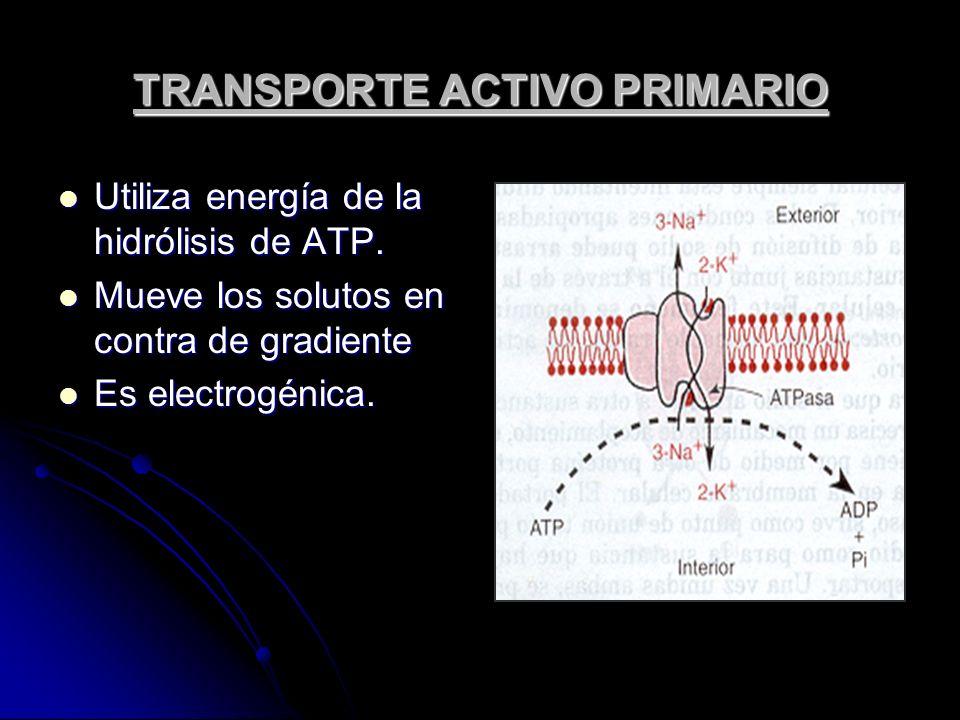 TRANSPORTE ACTIVO PRIMARIO Utiliza energía de la hidrólisis de ATP. Utiliza energía de la hidrólisis de ATP. Mueve los solutos en contra de gradiente