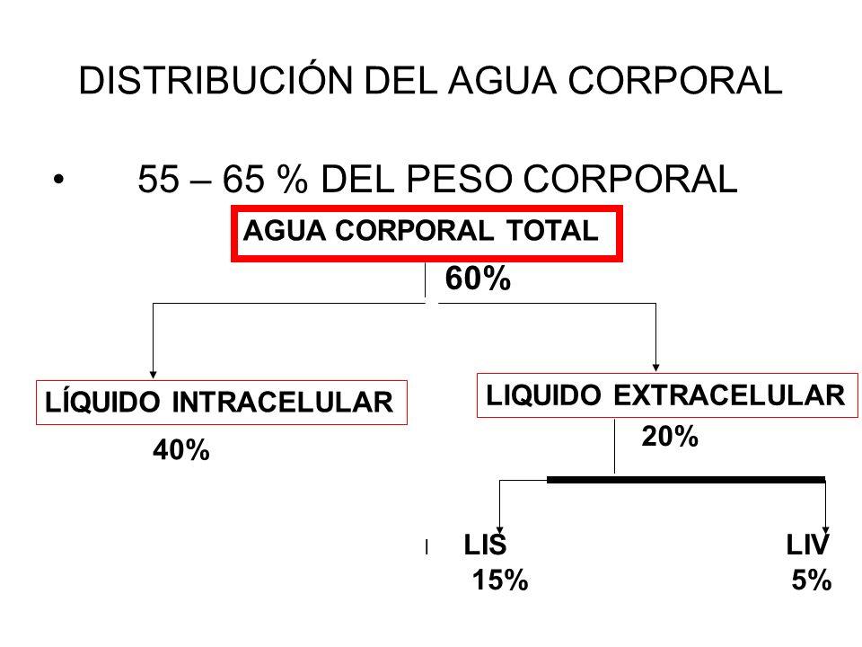 DISTRIBUCIÓN DEL AGUA CORPORAL 55 – 65 % DEL PESO CORPORAL AGUA CORPORAL TOTAL 60% LÍQUIDO INTRACELULAR LIQUIDO EXTRACELULAR 40% 20% LIS LIV 15% 5% I