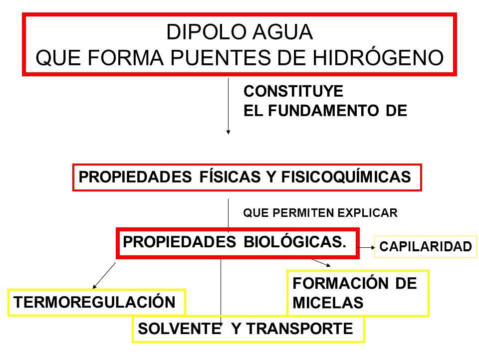 DIPOLO AGUA QUE FORMA PUENTES DE HIDRÓGENO CONSTITUYE EL FUNDAMENTO DE PROPIEDADES FÍSICAS Y FISICOQUÍMICAS QUE PERMITEN EXPLICAR PROPIEDADES BIOLÓGIC