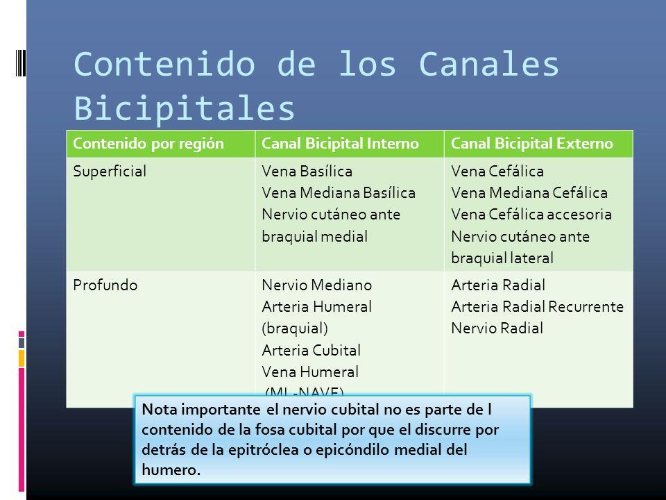 Contenido de los Canales Bicipitales Contenido por regiónCanal Bicipital InternoCanal Bicipital Externo Superficial Vena Basílica Vena Mediana Basílic