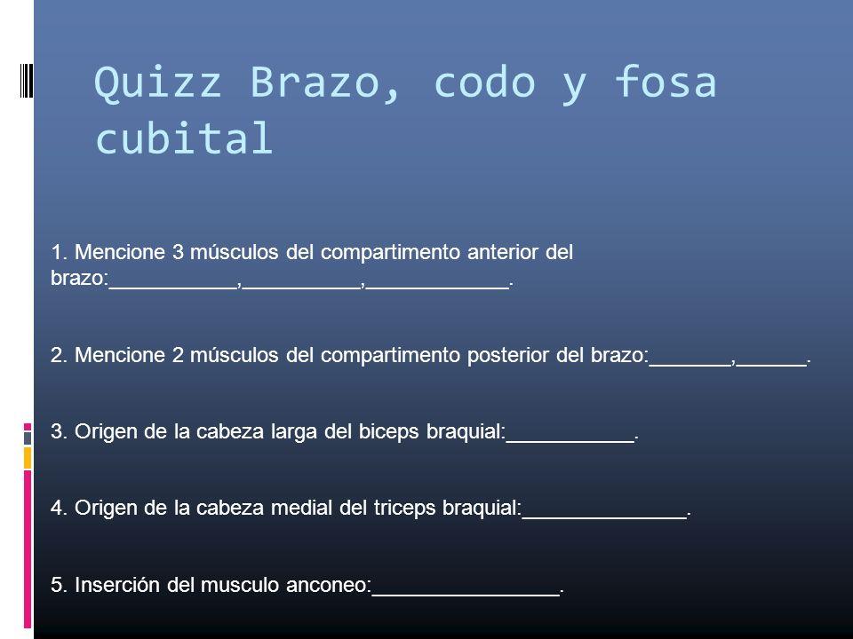 Quizz Brazo, codo y fosa cubital 1. Mencione 3 músculos del compartimento anterior del brazo:___________,__________,____________. 2. Mencione 2 múscul