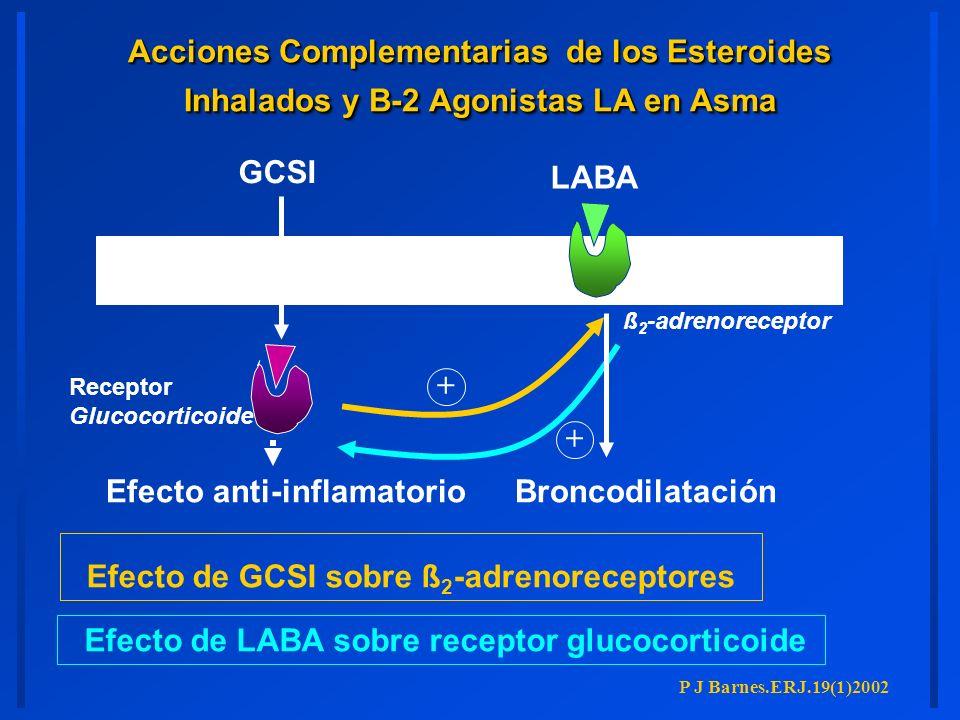 Receptor Glucocorticoide ß 2 -adrenoreceptor Efecto de GCSI sobre ß 2 -adrenoreceptores GCSI Efecto anti-inflamatorio Efecto de LABA sobre receptor gl