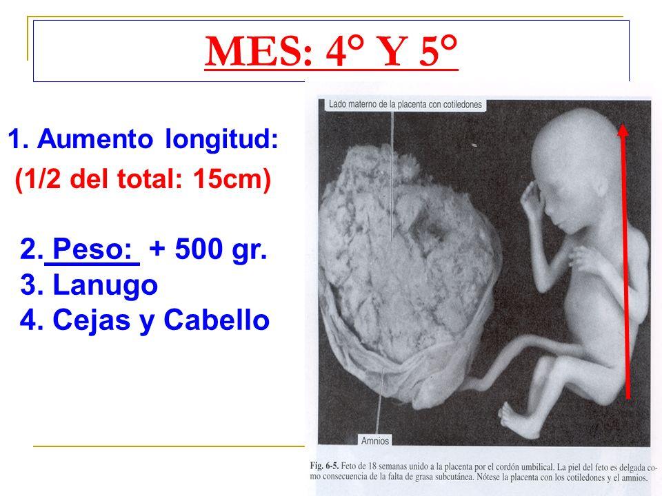 MES: 4° Y 5° 1. Aumento longitud: (1/2 del total: 15cm) 2. Peso: + 500 gr. 3. Lanugo 4. Cejas y Cabello