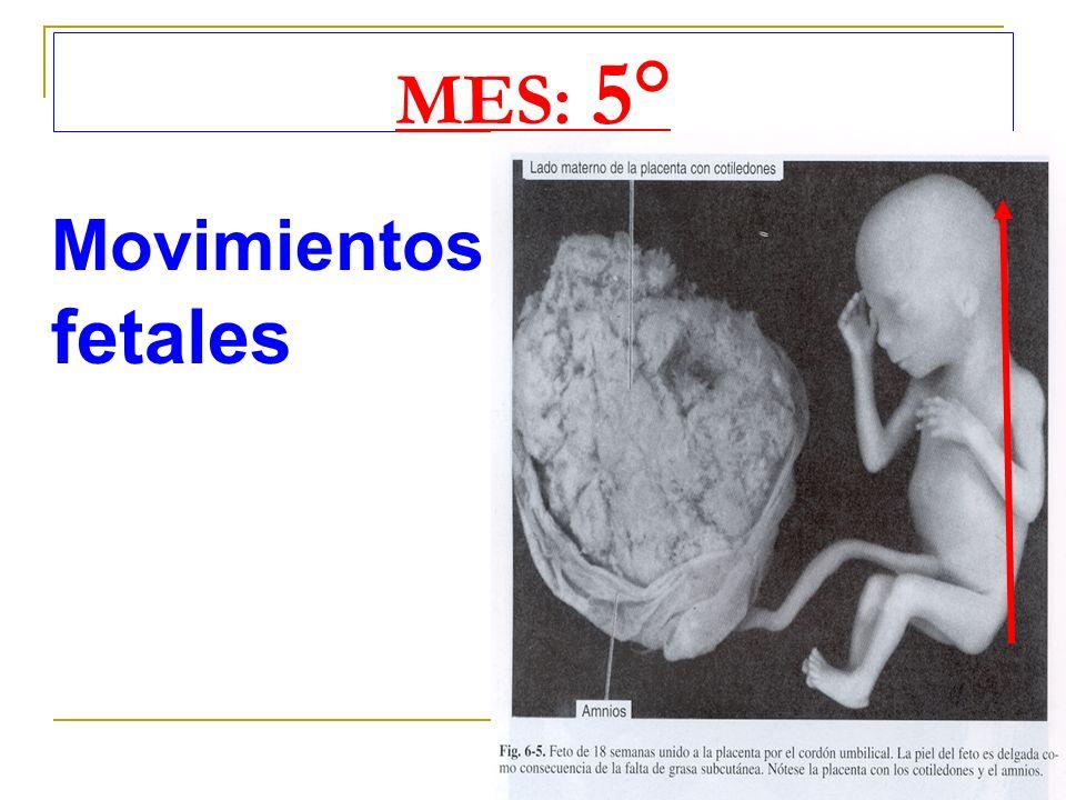 MES: 5° Movimientos fetales