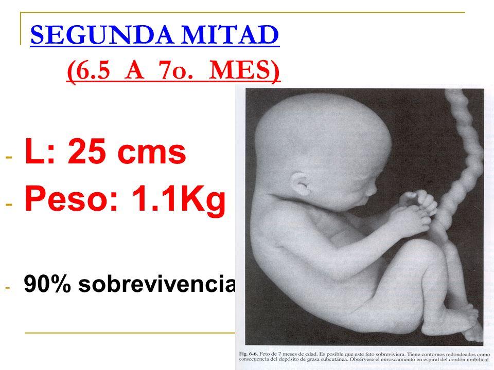 SEGUNDA MITAD (6.5 A 7o. MES) - L: 25 cms - Peso: 1.1Kg - 90% sobrevivencia