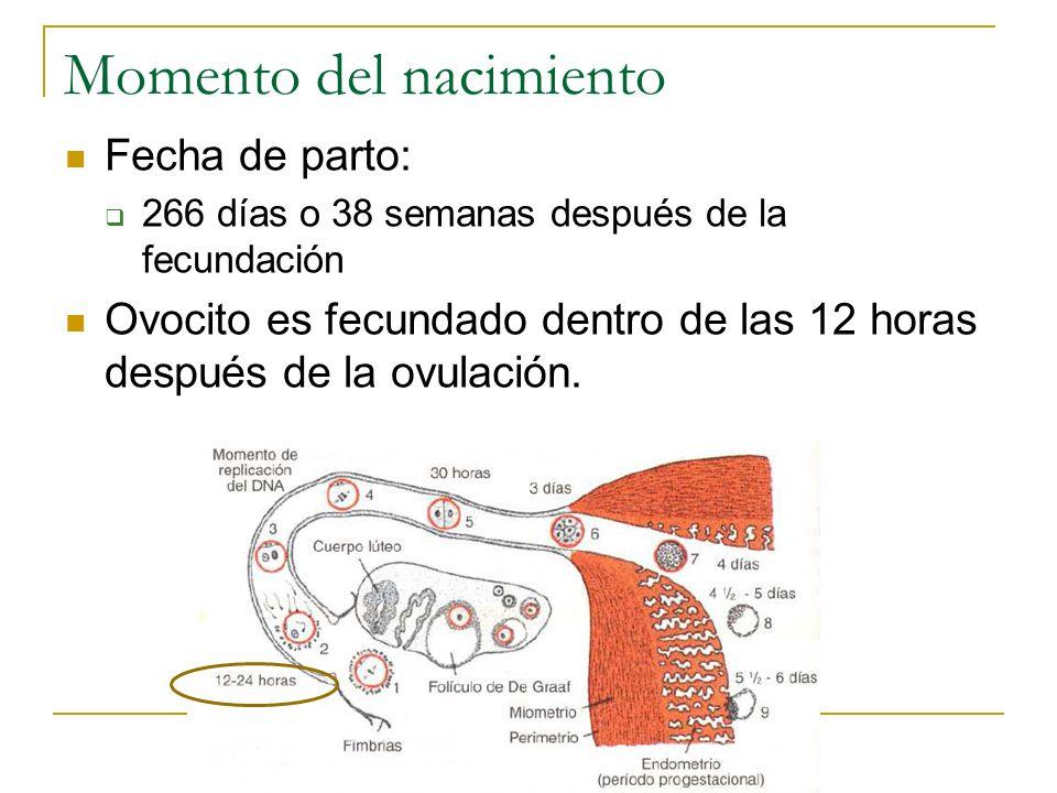 Momento del nacimiento Fecha de parto: 266 días o 38 semanas después de la fecundación Ovocito es fecundado dentro de las 12 horas después de la ovula