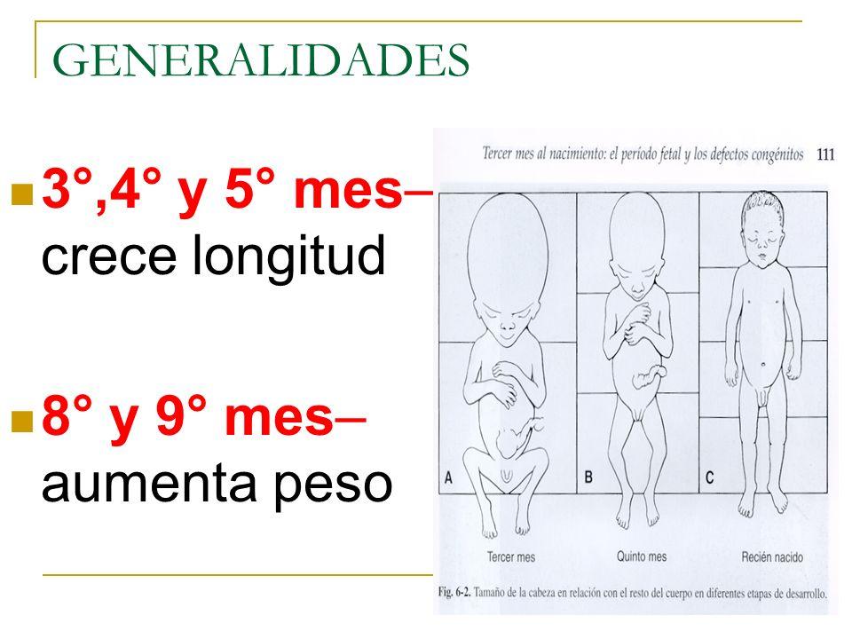 GENERALIDADES 3°,4° y 5° mes– crece longitud 8° y 9° mes– aumenta peso