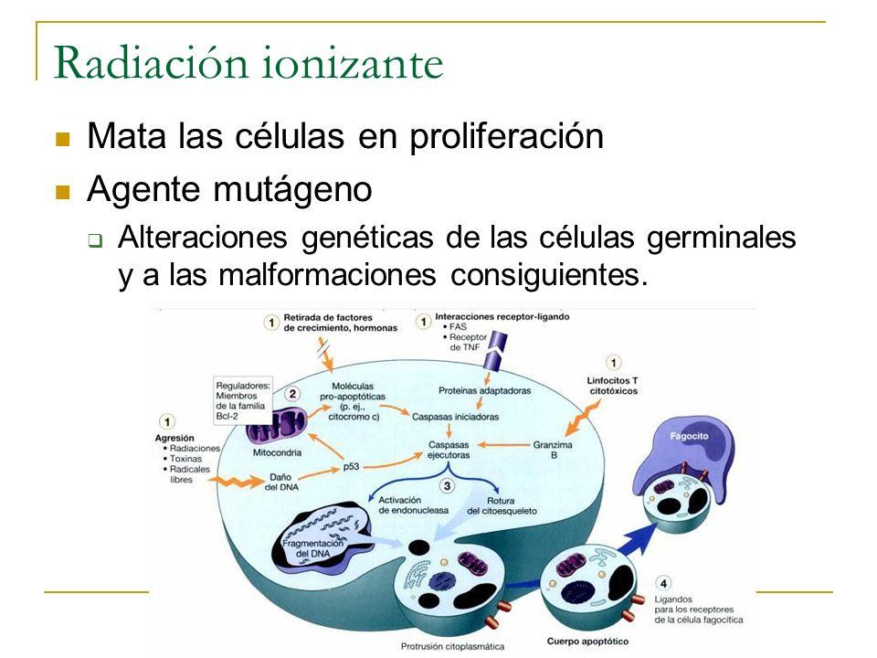 Radiación ionizante Mata las células en proliferación Agente mutágeno Alteraciones genéticas de las células germinales y a las malformaciones consigui