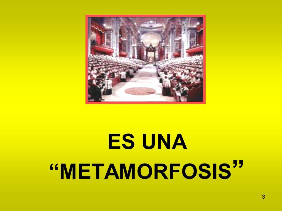 3 ES UNA METAMORFOSIS