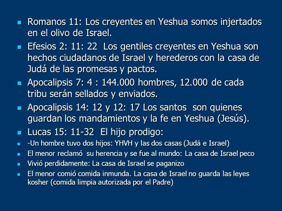 Romanos 11: Los creyentes en Yeshua somos injertados en el olivo de Israel. Romanos 11: Los creyentes en Yeshua somos injertados en el olivo de Israel