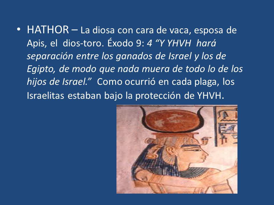 HATHOR – La diosa con cara de vaca, esposa de Apis, el dios-toro. Éxodo 9: 4 Y YHVH hará separación entre los ganados de Israel y los de Egipto, de mo