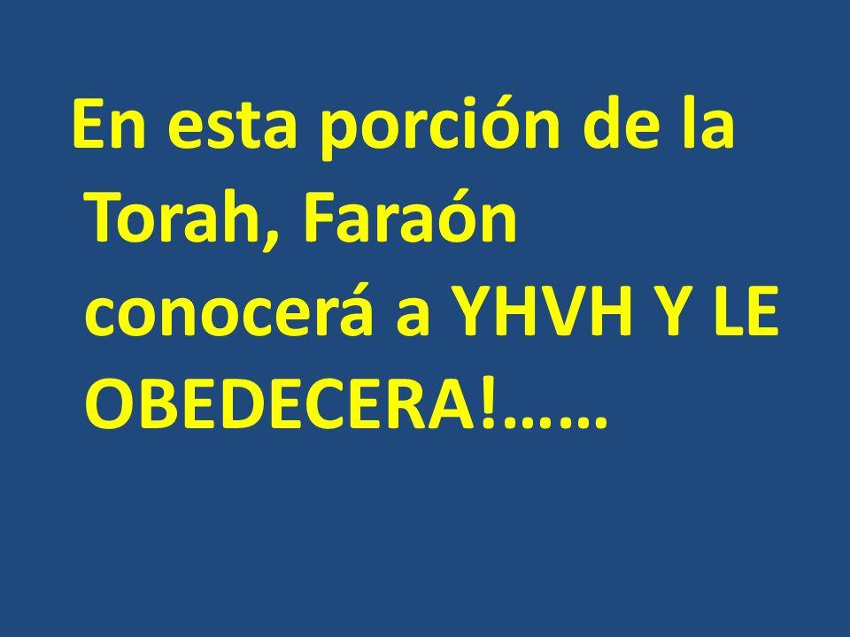 EXODO 11: 1 : YHVH dijo a Moisés: Una plaga traeré aún sobre Faraón y sobre Egipto, después de la cual él os dejará ir de aquí; y seguramente os echará de aquí del todo…..