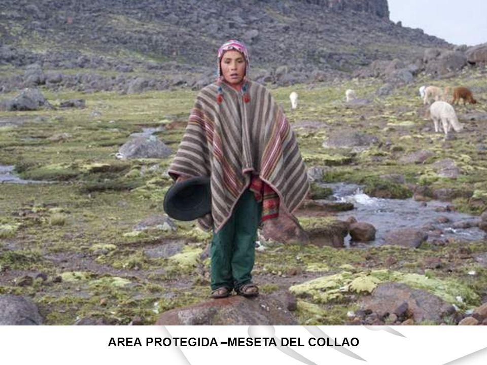 AREA PROTEGIDA –MESETA DEL COLLAO