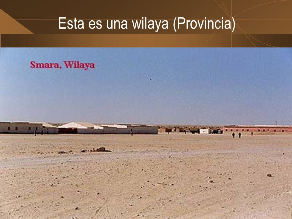 Los campamentos se estructuran de la siguiente forma W il a y a s EL AAIÚNSMARAAUSERDDAJLA D a i r a s DcheraFarsiaZugBir Nzaran AmgalaChderiaAgüenitA