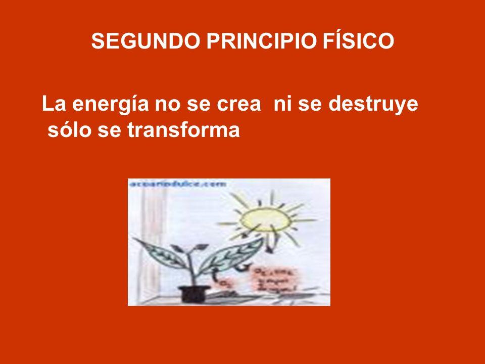SEGUNDO PRINCIPIO FÍSICO La energía no se crea ni se destruye sólo se transforma