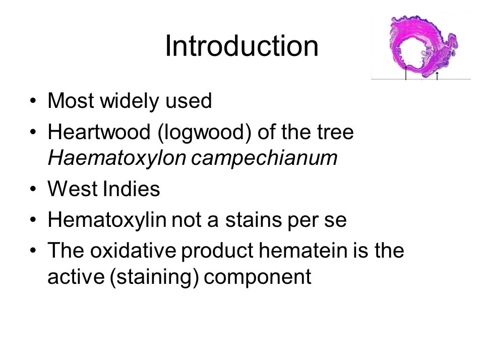 Introduction Most widely used Heartwood (logwood) of the tree Haematoxylon campechianum West Indies Hematoxylin not a stains per se The oxidative product hematein is the active (staining) component
