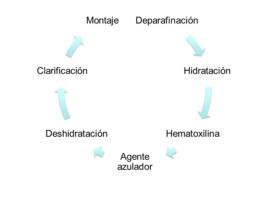 Hematoxylin Natural oxidation (longer shelf life) –Air and sun Chemical oxidation (shorter shelf life) –Sodium iodate –Mercuric oxide Anionic (negative charged), poor affinity for tissue Needs mordant to adhere to tissues