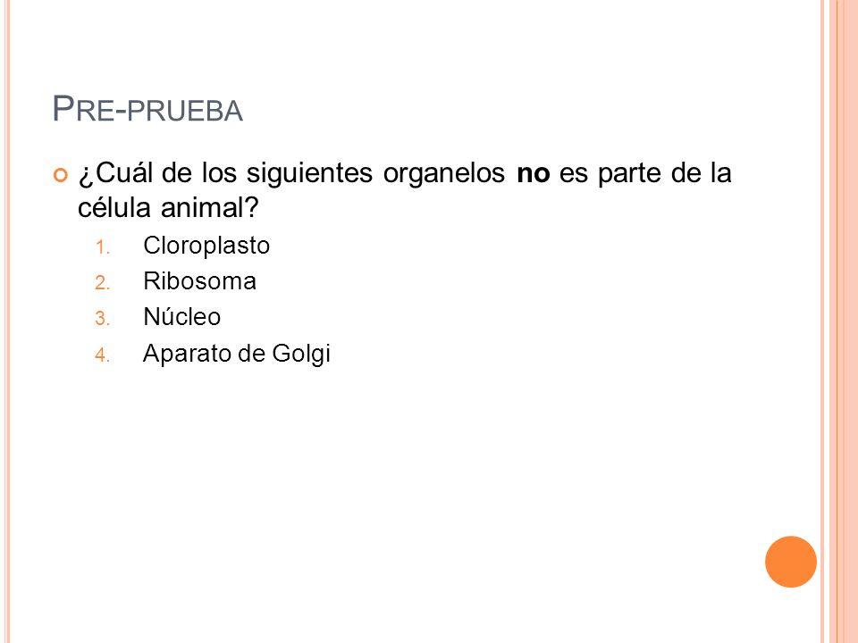 P RE - PRUEBA ¿Cuál de los siguientes organelos no es parte de la célula animal? 1. Cloroplasto 2. Ribosoma 3. Núcleo 4. Aparato de Golgi