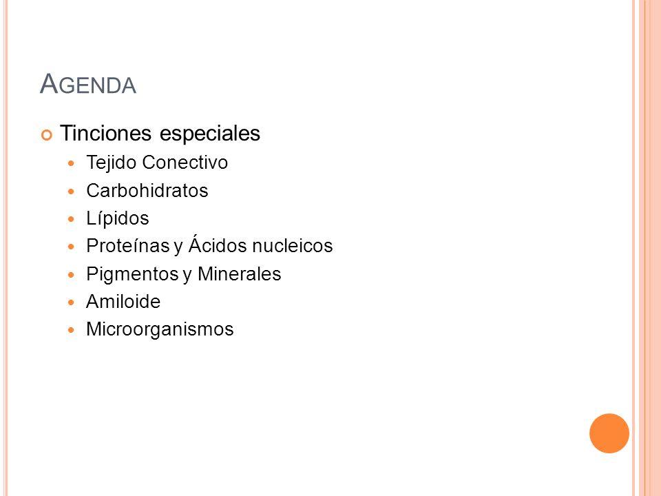 A GENDA Tinciones especiales Tejido Conectivo Carbohidratos Lípidos Proteínas y Ácidos nucleicos Pigmentos y Minerales Amiloide Microorganismos