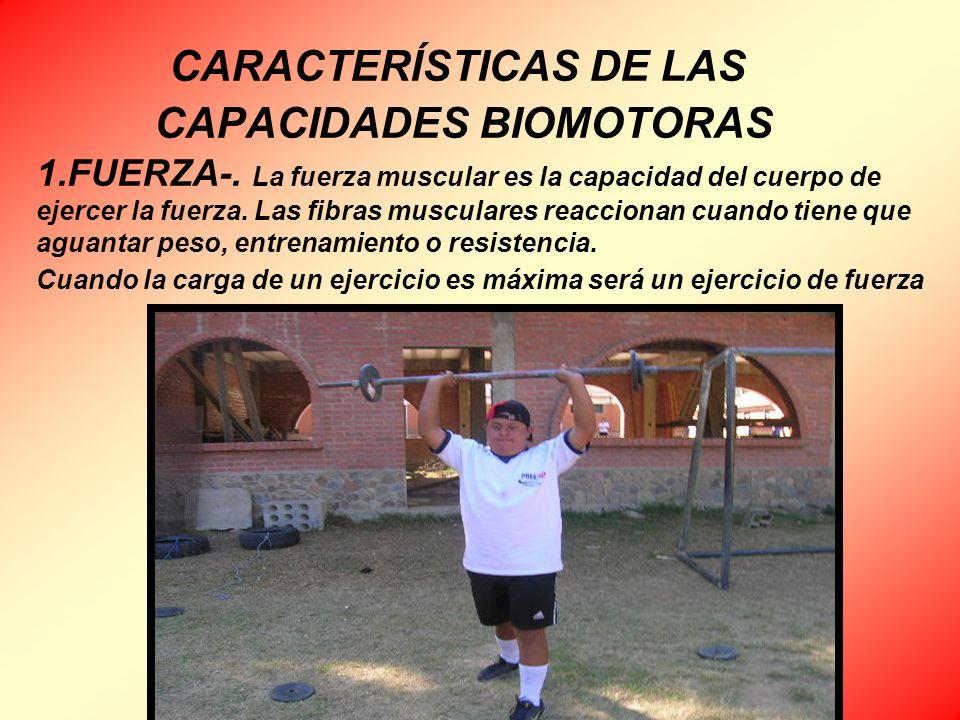 CARACTERÍSTICAS DE LAS CAPACIDADES BIOMOTORAS 1.FUERZA-. La fuerza muscular es la capacidad del cuerpo de ejercer la fuerza. Las fibras musculares rea
