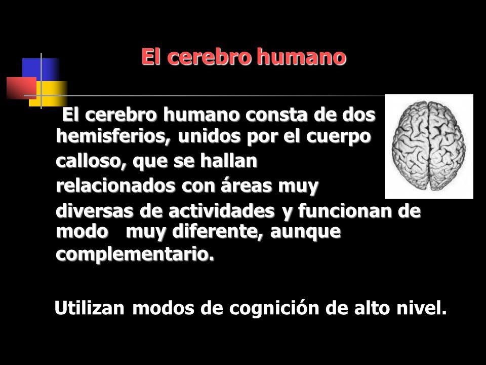 El cerebro humano El cerebro humano consta de dos hemisferios, unidos por el cuerpo El cerebro humano consta de dos hemisferios, unidos por el cuerpo calloso, que se hallan relacionados con áreas muy diversas de actividades y funcionan de modo muy diferente, aunque complementario.