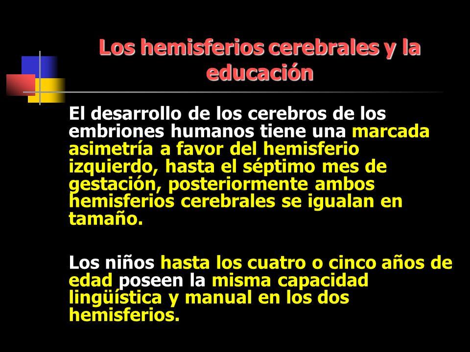 Los hemisferios cerebrales y la educación El desarrollo de los cerebros de los embriones humanos tiene una marcada asimetría a favor del hemisferio izquierdo, hasta el séptimo mes de gestación, posteriormente ambos hemisferios cerebrales se igualan en tamaño.
