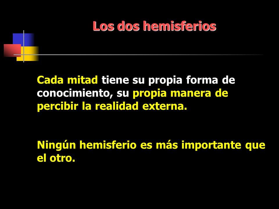 Los dos hemisferios Cada mitad tiene su propia forma de conocimiento, su propia manera de percibir la realidad externa.