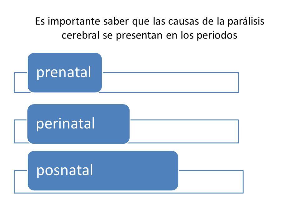 Es importante saber que las causas de la parálisis cerebral se presentan en los periodos prenatalperinatalposnatal