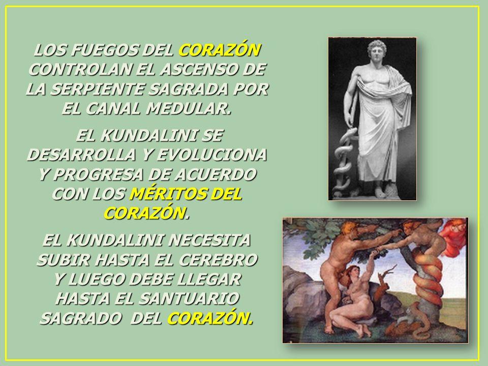 LOS FUEGOS DEL CORAZÓN CONTROLAN EL ASCENSO DE LA SERPIENTE SAGRADA POR EL CANAL MEDULAR. EL KUNDALINI SE DESARROLLA Y EVOLUCIONA Y PROGRESA DE ACUERD