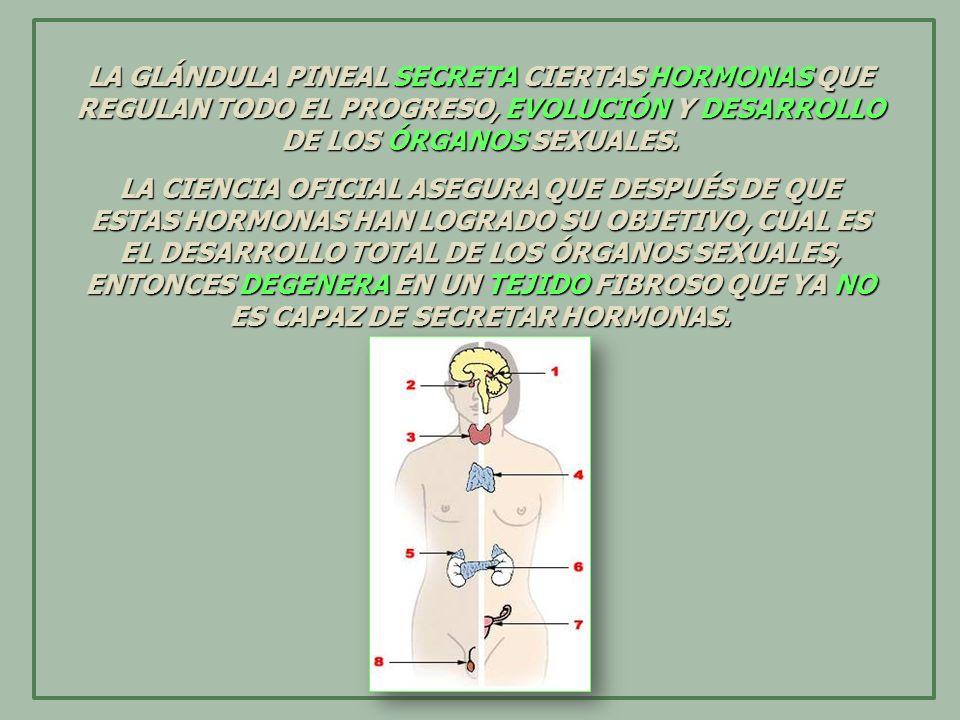 LA GLÁNDULA PINEAL SECRETA CIERTAS HORMONAS QUE REGULAN TODO EL PROGRESO, EVOLUCIÓN Y DESARROLLO DE LOS ÓRGANOS SEXUALES. LA CIENCIA OFICIAL ASEGURA Q