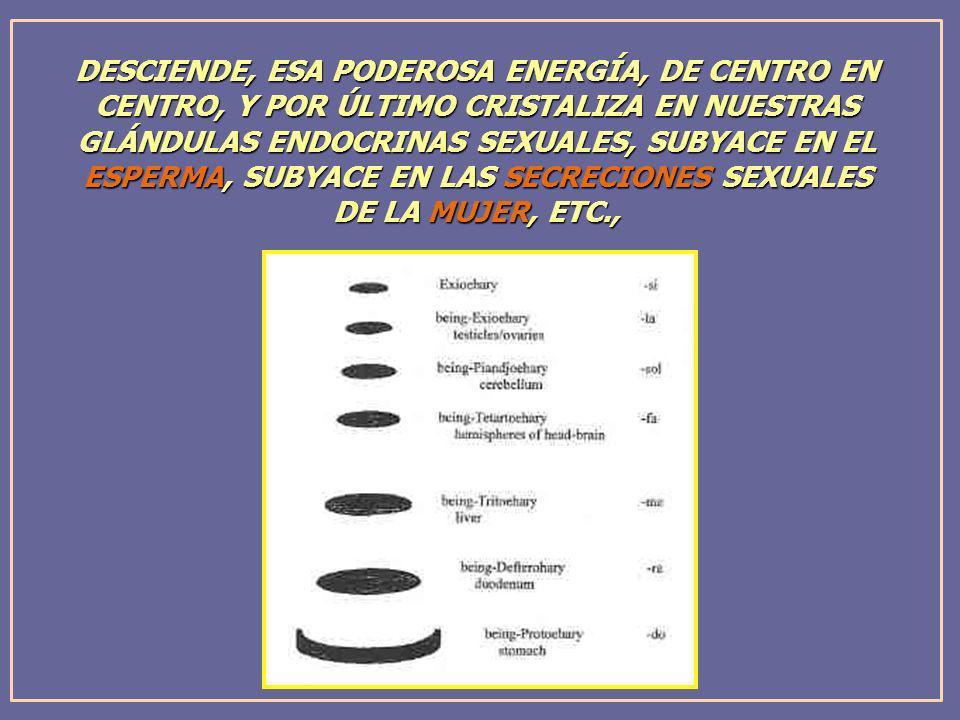 DESCIENDE, ESA PODEROSA ENERGÍA, DE CENTRO EN CENTRO, Y POR ÚLTIMO CRISTALIZA EN NUESTRAS GLÁNDULAS ENDOCRINAS SEXUALES, SUBYACE EN EL ESPERMA, SUBYAC