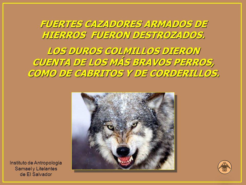 FUERTES CAZADORES ARMADOS DE HIERROS FUERON DESTROZADOS. LOS DUROS COLMILLOS DIERON CUENTA DE LOS MÁS BRAVOS PERROS, COMO DE CABRITOS Y DE CORDERILLOS