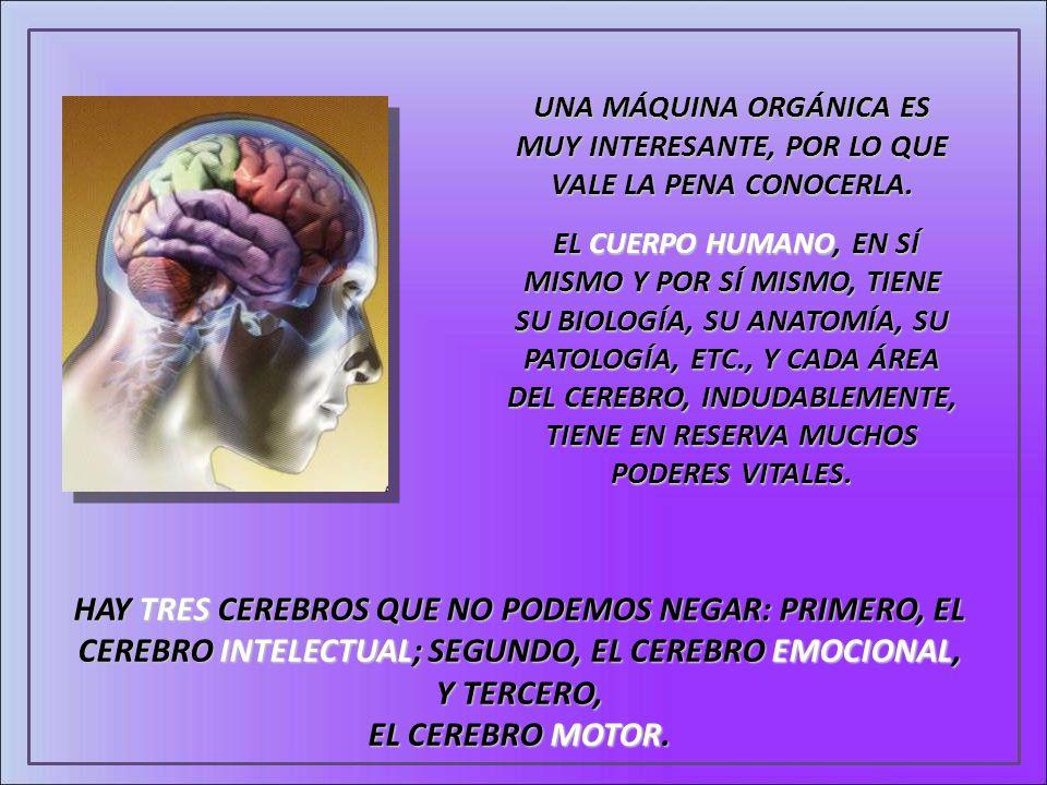 UNA MÁQUINA ORGÁNICA ES MUY INTERESANTE, POR LO QUE VALE LA PENA CONOCERLA. EL CUERPO HUMANO, EN SÍ MISMO Y POR SÍ MISMO, TIENE SU BIOLOGÍA, SU ANATOM