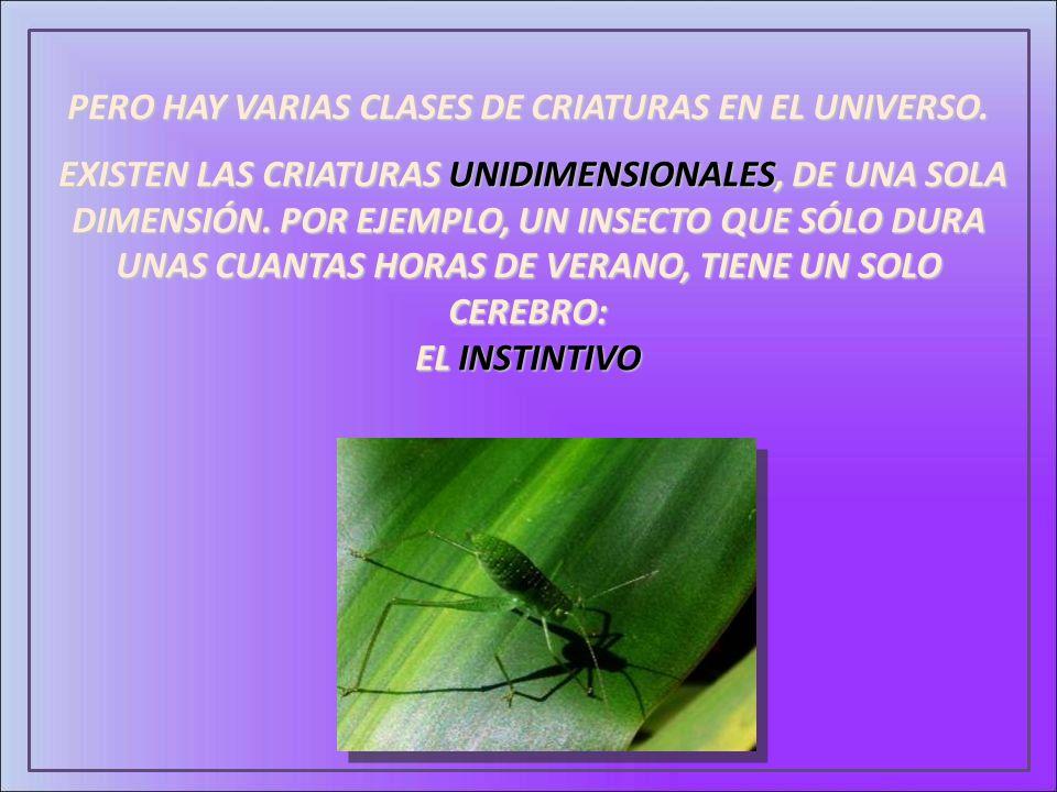PERO HAY VARIAS CLASES DE CRIATURAS EN EL UNIVERSO. EXISTEN LAS CRIATURAS UNIDIMENSIONALES, DE UNA SOLA DIMENSIÓN. POR EJEMPLO, UN INSECTO QUE SÓLO DU