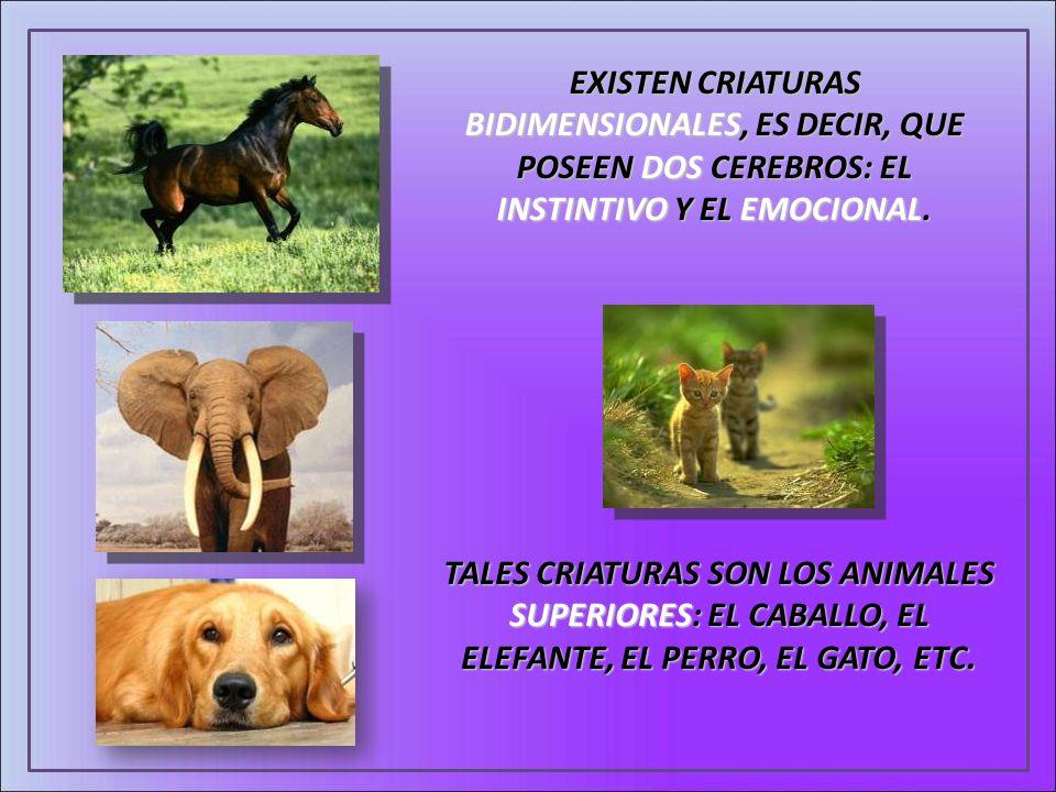 EXISTEN CRIATURAS BIDIMENSIONALES, ES DECIR, QUE POSEEN DOS CEREBROS: EL INSTINTIVO Y EL EMOCIONAL. TALES CRIATURAS SON LOS ANIMALES SUPERIORES: EL CA
