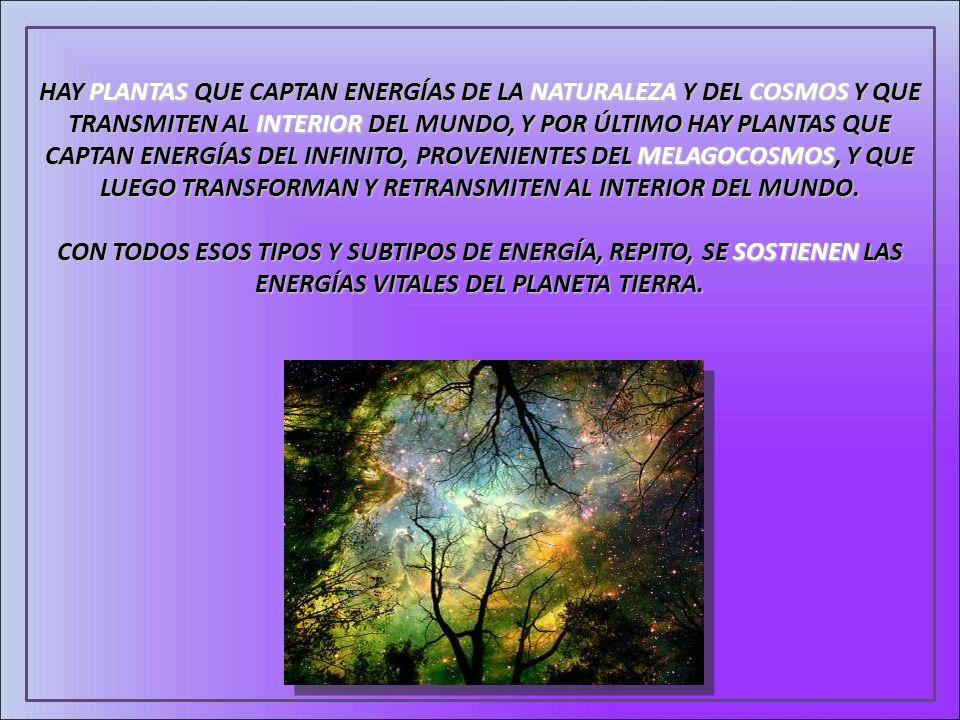 HAY PLANTAS QUE CAPTAN ENERGÍAS DE LA NATURALEZA Y DEL COSMOS Y QUE TRANSMITEN AL INTERIOR DEL MUNDO, Y POR ÚLTIMO HAY PLANTAS QUE CAPTAN ENERGÍAS DEL