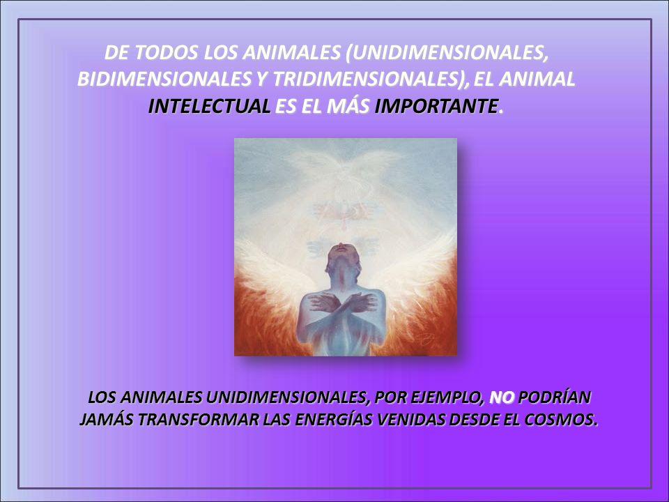 DE TODOS LOS ANIMALES (UNIDIMENSIONALES, BIDIMENSIONALES Y TRIDIMENSIONALES), EL ANIMAL INTELECTUAL ES EL MÁS IMPORTANTE. LOS ANIMALES UNIDIMENSIONALE